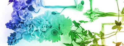 Скачать Floral Frames By Lileya