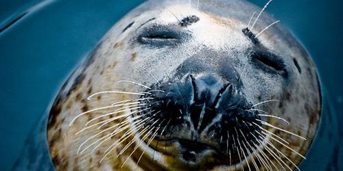 Перейти на Seal, Adventure Aquarium