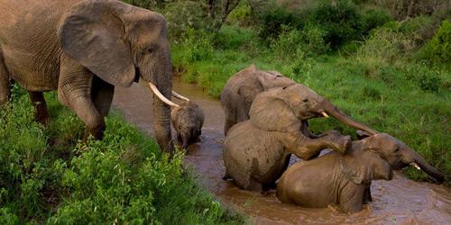 Перейти на Samburu Elephants, Kenya