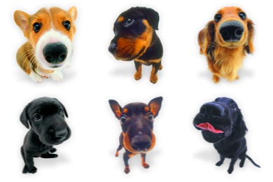 Скачать Dogs N Puppies Icons By Wackypixel