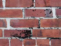 Скачать большие текстуры с изображениями кирпичной стены