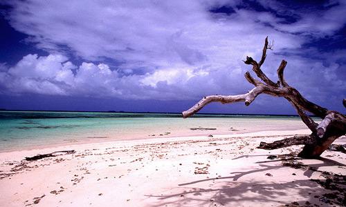 Скачать Laura beach n' tree