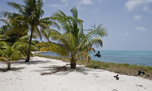 Скачать tropics-beach-palmtrees