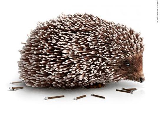 Перейти на Volunteer Wildfire Services: Match Hedgehog