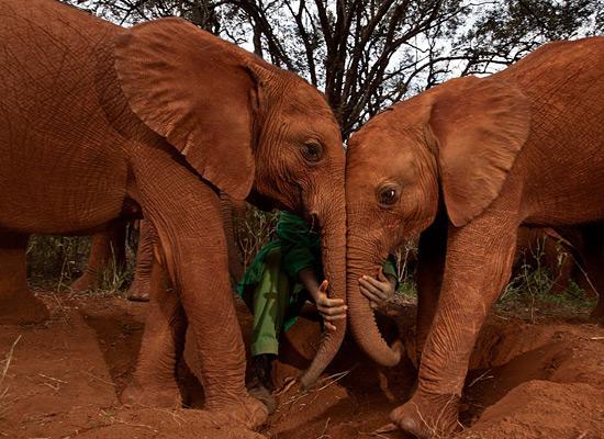 Перейти на Orphan Elephants Kenya