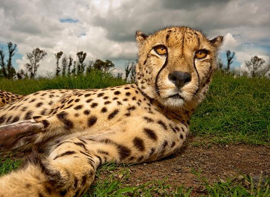 Перейти на Cheetah South Africa