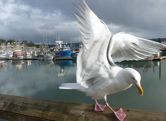 Перейти на Seagull Marina