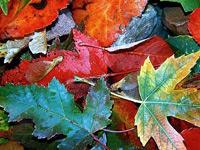 Скачать текстуры разноцветными опавшими осенними листьями