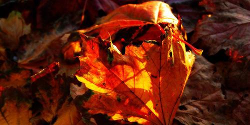 Скачать Текстуру осенних листьев