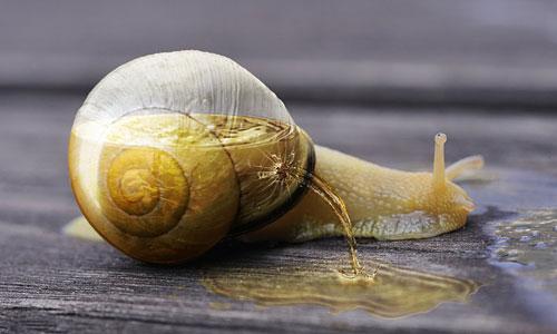 Перейти на Half Full Snail
