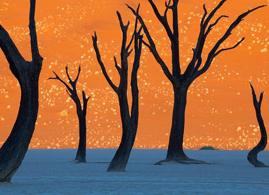 Перейти на Camel Thorn Trees, Namibia