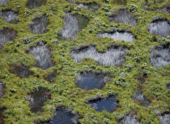Перейти на Peatland Australia Essick
