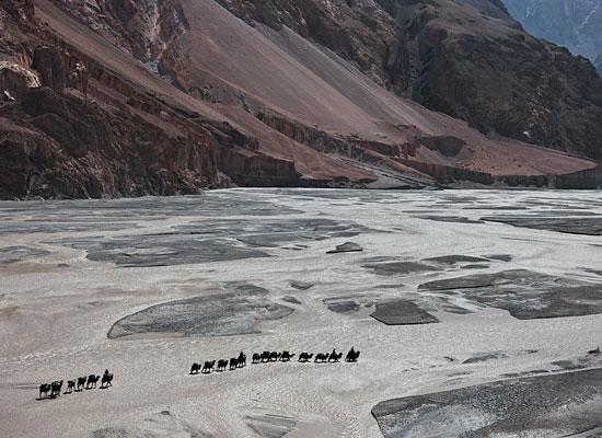 Перейти на Camels Shaksgam River Heinrich