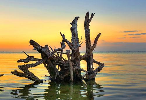 Перейти на Longboat Key Tree