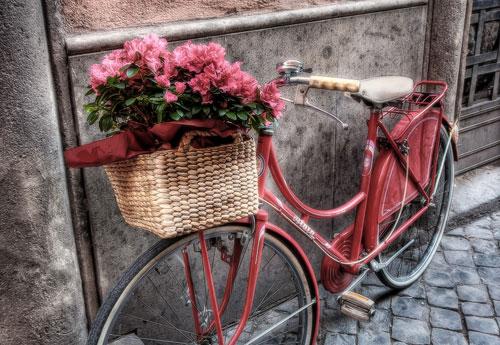 Перейти на Flowers On The Bicycle