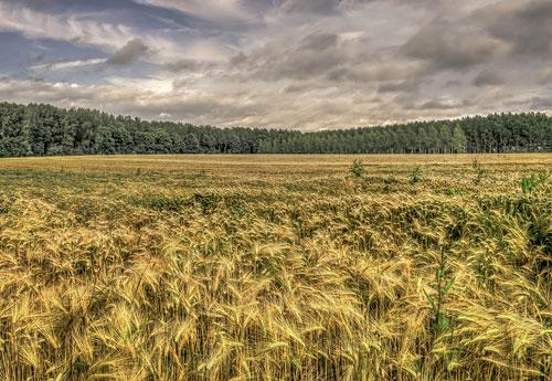 Перейти на Almost Harvest Time