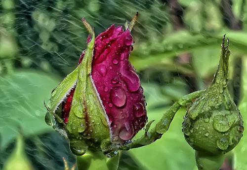 Перейти на Flowers Drizzling