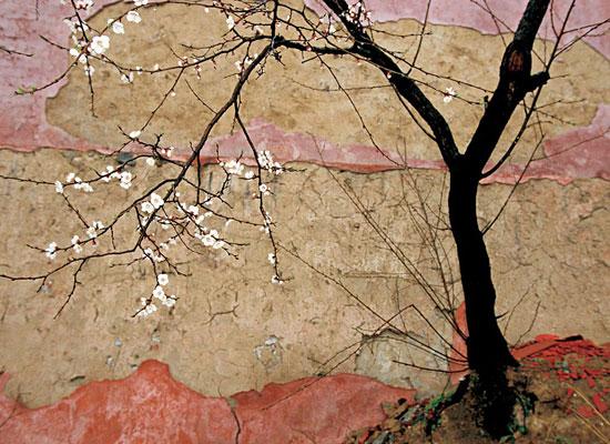 Перейти на Plum Tree, China