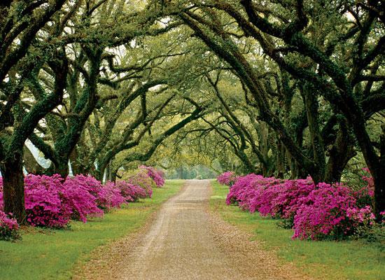 Перейти на Tree-Lined Driveway, Mississippi