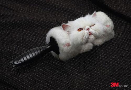 Перейти на 3M Lint Roller: Cat