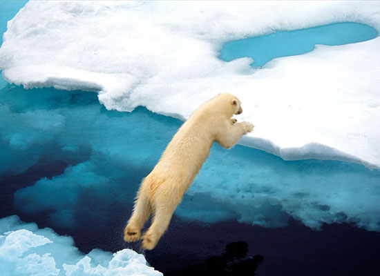 Polar Bear Leaping