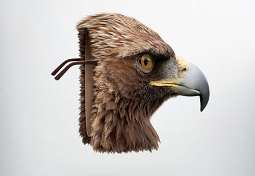 Sears Optical: Eagle
