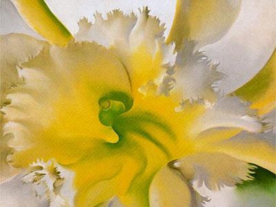 Перейти на An Orchid