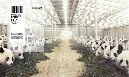 Перейти на Conservation International Panda
