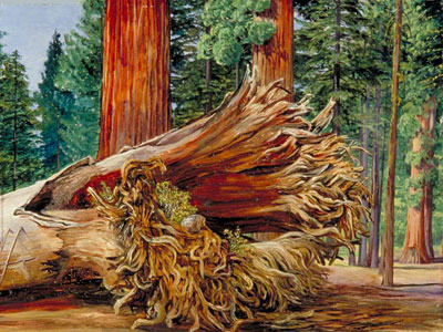 Перейти на A Fallen Giant Calaveras Grove California