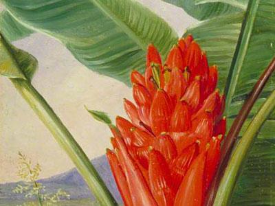 Перейти на Banana American Aloe And Cypress