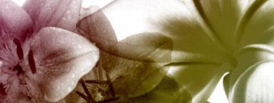 Скачать Yana Stock Floral2