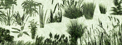 Скачать Grasses and Plants PS Brushes by redheadstock