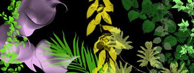 Скачать Plant Brushes Photoshop 7 By Forbidden Stock
