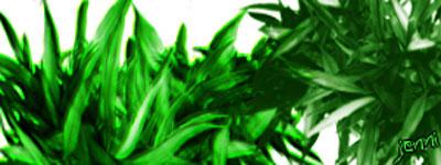 Скачать Plants Brushes