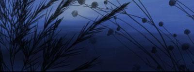Скачать Plants By Fantasybrushes