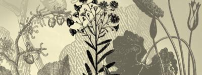 Скачать US Medicinal Plants By Remittancegirl