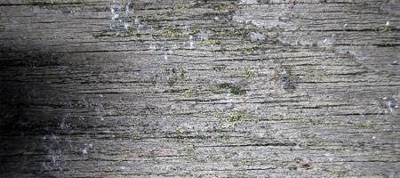Скачать Wood Textures 10