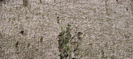 Скачать Wood Textures 13