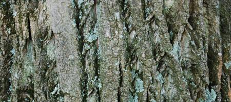 Скачать Wood Textures 14