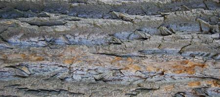 Скачать Wood Textures 15