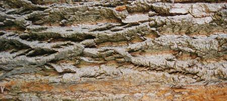 Скачать Wood Textures 16