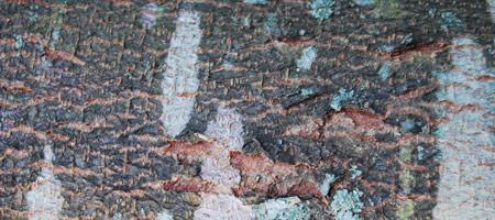 Скачать Wood Textures 18