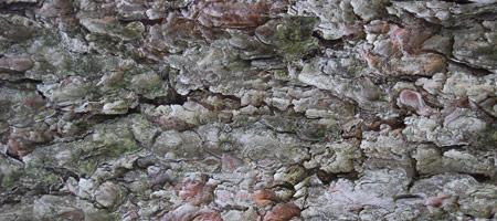 Скачать Wood Textures 19