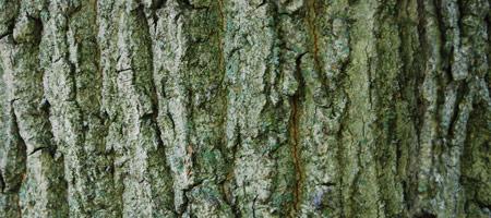 Скачать Wood Textures 20