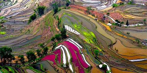 Перейти на Terraced Rice Field, China