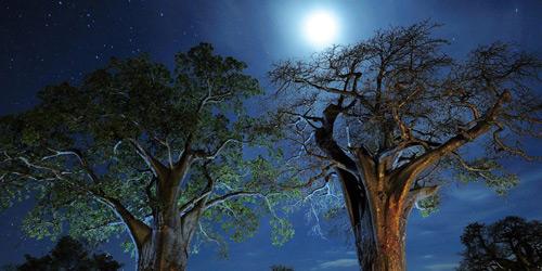 Перейти на Baobab Trees, Tanzania