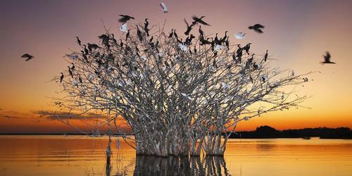 Перейти на Pantanal, Brazil