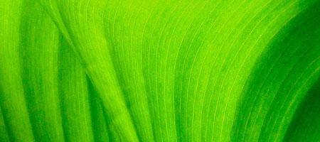 Скачать Текстура листвы