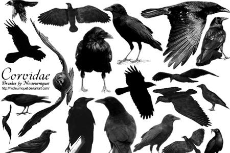 Скачать Corvidae Ravens N Crows