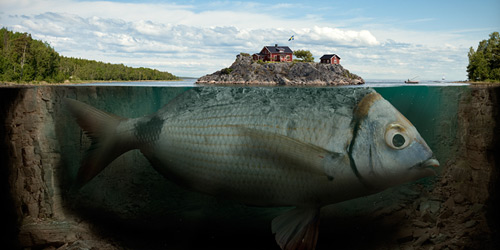 Перейти на fishy island